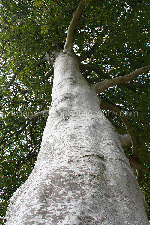 View from the ground of tree trunk in Ireland