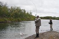 Silver Salmon Fishing..shot on the Kanektok River, Alaska, USA..