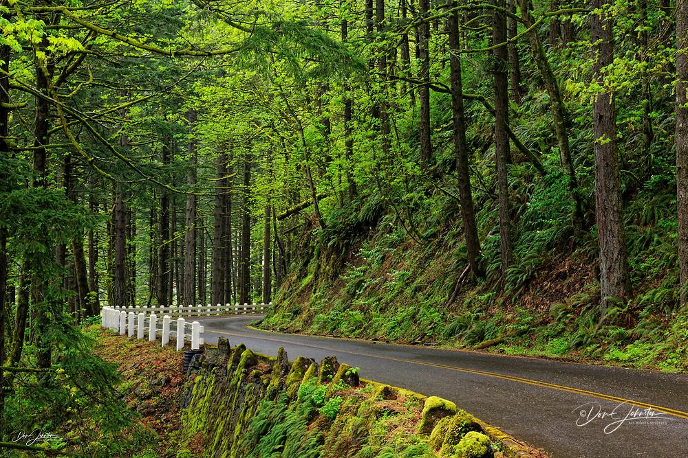 Scenic road through the Columbia Gorge Waterfall area., Columbia Gorge Nat Scenic Area, Oregon, USA