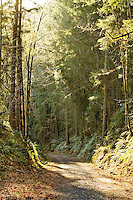 Streaming sunlight on a forest trail