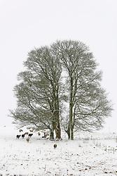 © Licensed to London News Pictures. 24/01/2021. Llanfihangel Nant Melan, Powys, Wales, UK. A winter landscape after overnight snow  near Llanfihangel nant Melan in Powys, Wales, UK. Photo credit: Graham M. Lawrence/LNP