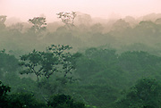 The misty rain forest at dawn from above the canopy - Amazonia, Peru