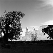 Tree Silhouettes And Monuments