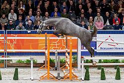 047, Mattias<br /> KWPN hengstenkeuring - 's Hertogenbosch 2020<br /> © Hippo Foto - Dirk Caremans<br />  30/01/2020