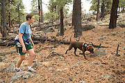 CJ, a chocolate lab working as a trained wildlife detector dog, tries to find bat roosting sites along with his handler, wildlife technician Elisabeth Mering. Coconino National Forest, Arizona.