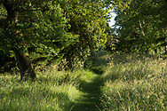 A path through grasses and trees near the moat at Hindringham Hall, Hindringham, Norfolk, UK