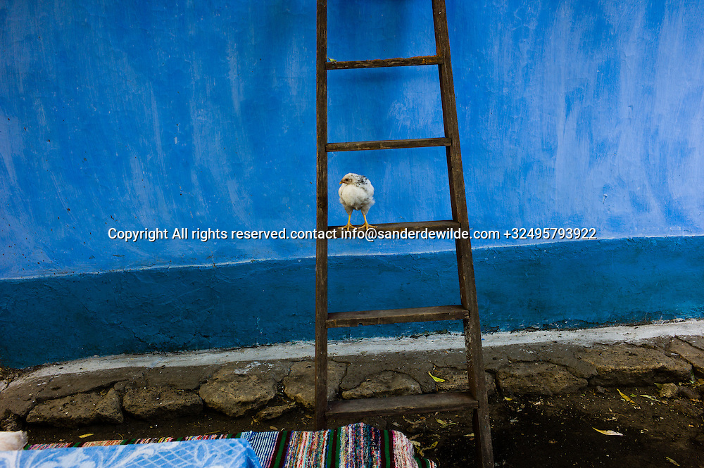 20150821  Moldova, Tipova. chicken makes a nice composition on this ladder at my blue guesthouse in Tipova  Moldova