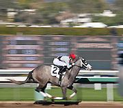 Jockey Riding His Horse at Santa Anita Park