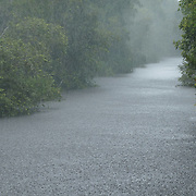 Pouring rain on the Sekonyer river, Tanjung Puting National Park. Borneo