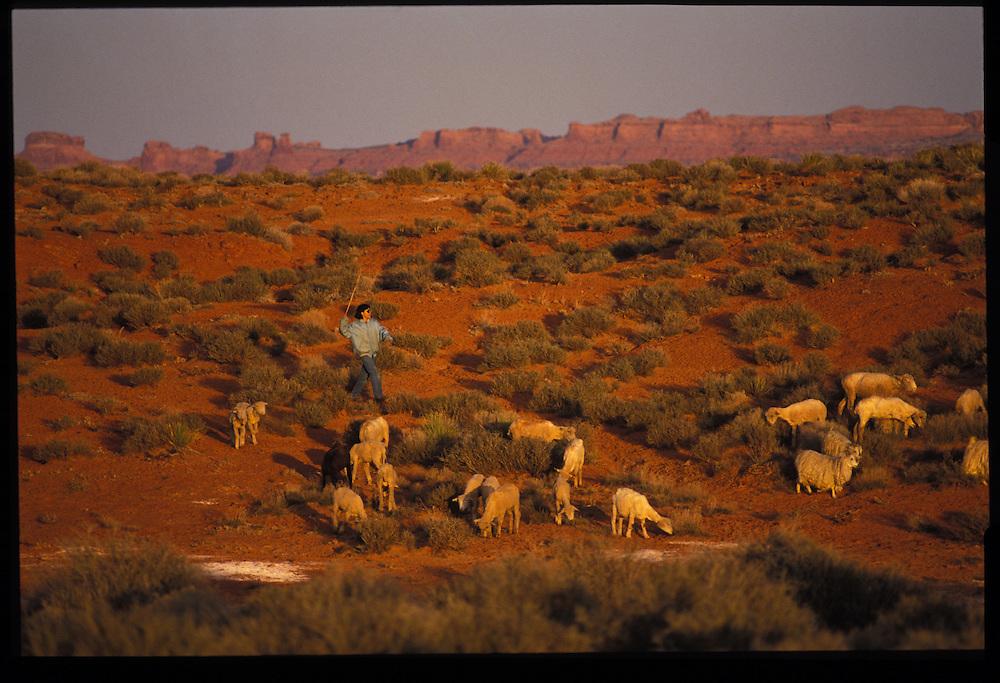 Sheep herding.  Monument Valley.  1993
