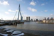 Erasmus bridge, Rotterdam, Netherlands.Erasmusbrug, Rotterdam, Zuid Holland