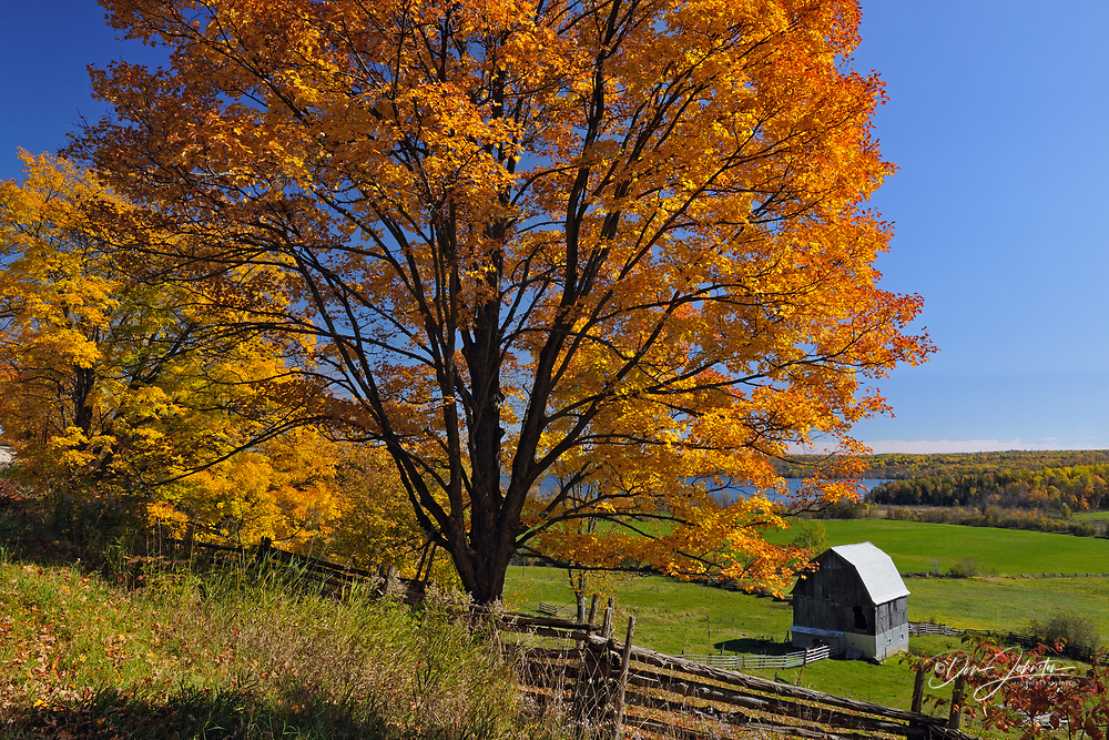 Maple trees overlooking distant farm buildings, Manitoulin Is. Townline Rd., Ontario, Canada