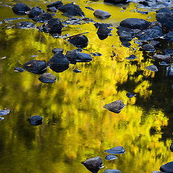 Tree reflections in the Isinglass River in Barrington, New Hampshire.