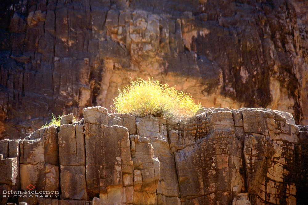 Backlit sagebrush, Grand Canyon, Arizona. Location photography by Portland Oregon photographer Brian McLernon www.brianmclernon.com 503 768-9878