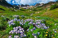 USA-Colorado-American Basin-Wildflowers