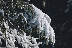 THEMENBILD - Schneebedeckte Nadelbäume. Das Naturdenkmal Wasenmoos lädt auch im Winter zu ausgedehnten Wanderungen in den Kitzbüheler Alpen ein, aufgenommen am 21. November 2020 in Mittersill, Oesterreich // Snow-covered conifers. The natural monument Wasenmoos invites you also in winter to extensive hikes in the Kitzbüheler Alps, in Mittersill, Austria on 2020/11/21. EXPA Pictures © 2020, PhotoCredit: EXPA/Stefanie Oberhauser