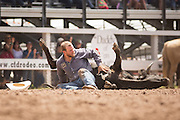 Steer Wrestler Wyatt Johnson of Hoyt, Colorado checks his steer after the animal was injured during his run at the Cheyenne Frontier Days rodeo at Frontier Park Arena July 24, 2015 in Cheyenne, Wyoming. Frontier Days celebrates the cowboy traditions of the west with a rodeo, parade and fair.