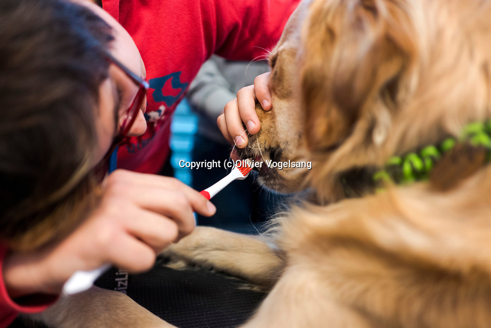 Saint-Cergue, décembre 2017. reportage dans une école spécialisée à St-Cergue, dans laquelle un chien scolaire est utilisé depuis le début de l'année pour venir en aide et calmer les élèves. C'est le premier chien à être utilisé de la sorte en Suisse romande. Brossage des dents pour Tahiti. © Olivier Vogelsang