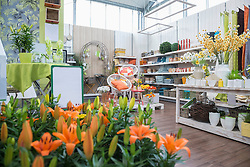 Flowers for sale in garden centre, Augsburg, Bavaria, Germany