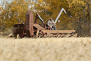 Photo Randy Vanderveen<br /> LaGlace, Alberta<br /> 2015-09-26 <br /> Bryan Woronuk fo Rycroft uses a Massey Harris Combine as  he helps harvest of Canada Prairie Spring (CPS) wheat takes place on Gary and Shirley Dixon's land for the Bear Lake  Growing Project. The grain will be sold and money donated to the Canadian Food Grains Bank. This year the project had a number of groups and individuals from around the South Peace sponsor an acre to cover the input costs so all the money from the grain sold could be donated.
