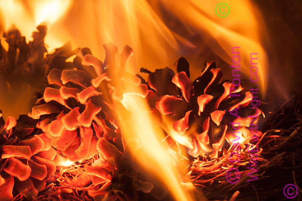 Fire burns pine needles and pine cones on forest floor, Jemez Mountains, New Mexico, © David A. Ponton