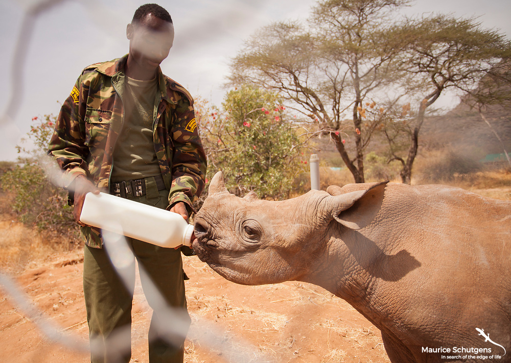 Loijipu getting a well deserved bottle from his guardian at Reteti Elephant Orphanage in Kenya.