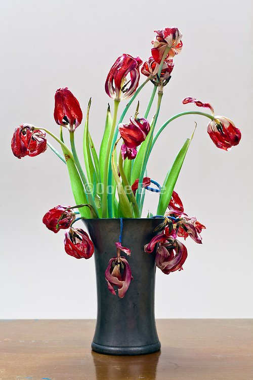 still life with red painted tulip flowers by Johan Mulder
