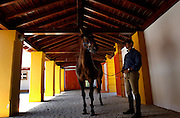 One horse is getting ready to a radiographie to his front foot. He is one of potencial lusitano atlets.
