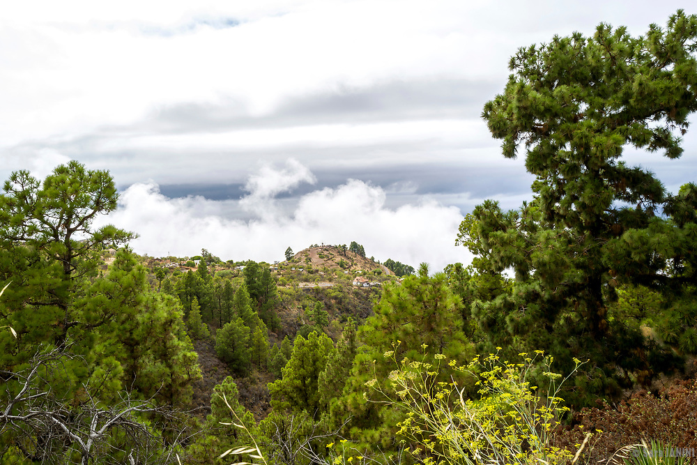 Carretera LP-112 Llano Negro- Santo Domingo de Garafía, Garafía, La Palma, Canarias, España, Europa