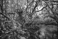 Everglades National Park, JohnBob Carlos