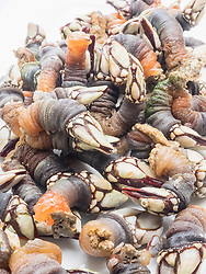 Close-up of fresh goose barnacles, Getxo, Algorta, Basque Country, Biscay, Spain, Europe