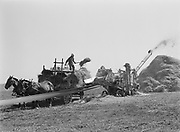 9969-3281. Threshing oats on the Hagg farm, showing bundles being fed into the machine. September 10, 1937. near Reedville, Oregon