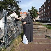 Nederland Den Haag 31 augustus 2008 2080831 Foto: David Rozing..Moslima geeft geiten en koe eten in achterstandswijk Schilderswijk. Moslims mogen volgens de Islam geen brood etc weggooien..De schilderwijk is een van de 40 wijken van Vogelaar. Deze lijst van 40 Nederlandse probleemwijken is op 22 maart 2007 door Minister Ella Vogelaar van Wonen, Wijken en Integratie bekend gemaakt. De minister duidde deze wijken aan met prachtwijken. In deze wijken zullen gedurende de kabinetsperiode Balkenende IV extra investeringen worden gedaan gezien stapeling van sociale, fysieke en economische problemen die zich daar voordoen..De wijk is in de tweede helft van de 19e eeuw gebouwd. Het is een van de armste wijken in Nederland. Zo'n 87% van de 33.123 geregistreerde bewoners is van niet-Westerse afkomst -- met name Turks, Surinaams en Marokkaans..De Schilderswijk is rijk aan verschillende culturen die boven en naast elkaar leven. Er is veel keuze in voedselaanbod in cafés, kleine restaurants, bars en supermarkten. Er is de Haagsche markt en er zijn winkels waarin verschillende culturen hun deur openen om iets nieuws te verkopen, zoals sieraden- en kledingwinkels. Allerlei stedelijke activiteiten liggen op loopafstand van de Schilderswijk. De Haagse binnenstad ligt 5 minuten lopen vanaf de rand van de Schilderswijk. Tram en ander openbaar vervoer zijn te bereiken op 5 tot 10 minuten loopafstand...Foto David Rozing