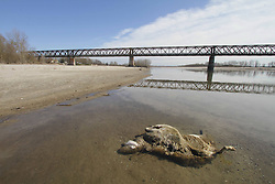 Italy, Pavia - March 13, 2019.Drought alert in Northern Italy: the Po river is dry as if it were mid-August.Severe drought in Italy because lack of autumn rain. Agriculture and farms in danger.Here a view of the Po river bed near the Ponte della Becca (Becca bridge) showing the effects of the drought, near Pavia March 13, 2019.Confluence of the Po and Ticino rivers (Credit Image: © Salmoirago/Fotogramma/Ropi via ZUMA Press)