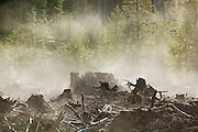 Moisture in the newly exposed soil rises as steam from a recent clearcut on the Olympic Peninsula, Washington.