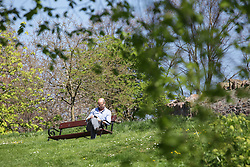 © Licensed to London News Pictures. 21/04/2015. Bristol, Avon, UK. A man relaxing on a bench in the park on Brandon Hill in Bristol today, 21st April 2015. The south west of England is set for more warm temperatures and plenty of sunshine today. Photo credit : Rob Arnold/LNP