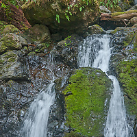 Cataract Creek pours between moss, ferns and lush undergrowth into a forest pool on the northwest slopes of Mount Tamalpais in Marin County, California.