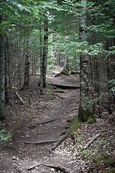 Superior hiking trail through Tettegouche State Park