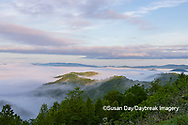 66745-04917 Early morning fog along Foothills Parkway Great Smoky Mountains National Park TN