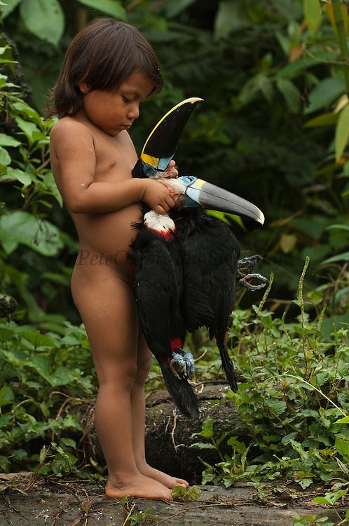 Huaorani Indian chid - Romelia Andy holding hunted toucans. Gabaro Community. Yasuni National Park.<br /> Amazon rainforest, ECUADOR.  South America<br /> The children play with the dead animals that their fathers bring in from hunting.<br /> This Indian tribe were basically uncontacted until 1956 when missionaries from the Summer Institute of Linguistics made contact with them. However there are still some groups from the tribe that remain uncontacted.  They are known as the Tagaeri & Taromenani. Traditionally these Indians were very hostile and killed many people who tried to enter into their territory. Their territory is in the Yasuni National Park which is now also being exploited for oil.