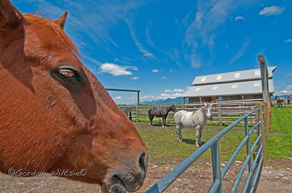 Horses stand in a corral at Eagle Rock Reserve, an subdivision near Bozeman, Montana, in which much of the open space is shared.