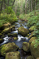 A rocky Steelhead Creek and Salmon Berry Plants (Rubus spectabilis) in the Hayward Lake Recreation Area in Mission, British Columbia, Canada