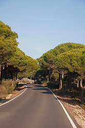 View of forest road with pine trees