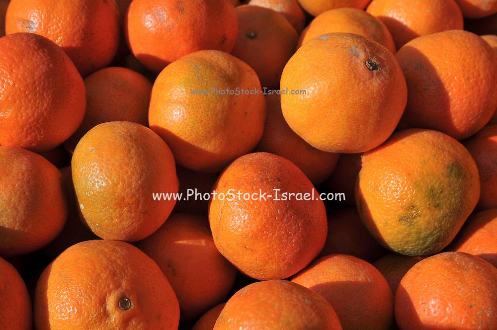 A pile of fresh oranges