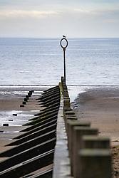Groyne on the beach at Portobello in Edinburgh, Scotland UK