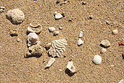 Seashells and coral on the shore of St Croix, US Virgin Islands