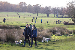 © Licensed to London News Pictures. 22/11/2020. London, UK. Walkers go out to exercise while enjoying the warm autumnal sunshine in Richmond Park, South West London as Prime Minister Boris Johnson is set to announce an end to the current lockdown. The Prime Minister is expected to address the Nation tomorrow to set out his plans for Christmas and the end of lockdown 2.0 on the 2nd of December 2020 with the opening up of shops, pubs and restaurants. However it is believed he will also introduce a new tougher three-tiered system with further localised restriction. Photo credit: Alex Lentati/LNP