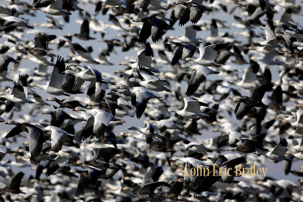 Wildlife at Squaw Creek Wildlife Refuge, Missouri. Photo by Colin E Braley