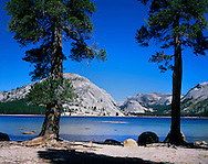 Lake Tenaya On A Perfect Summer's Day, Yosemite National Park, California