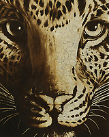 What does one see in the eyes of this cheetah? Do you find hope? Do you find anger? Perhaps hunger? The eyes of the cheetah in this illustration from Jan Keteleer are deep indeed. How you read into them, while remarking on the striking detail of this piece, is entirely up to you. Suitable for homes and businesses alike. –<br />